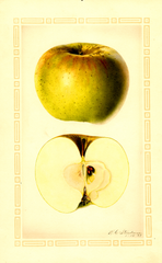 Apples, Baker (1927)