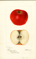 Apples, Baker (1894)