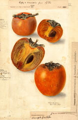 Persimmons (1908)