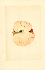 Apples, Baldwin (1910)