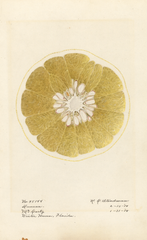 Grapefruits, Duncan (1918)
