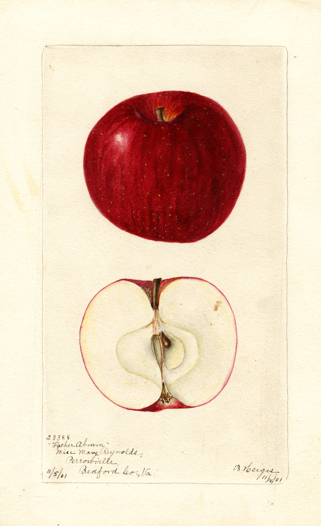 Apples, Father Abram (1901)