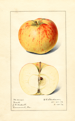Apples, Bank (1916)