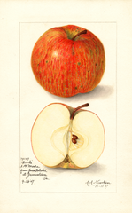 Apples, Banks (1907)