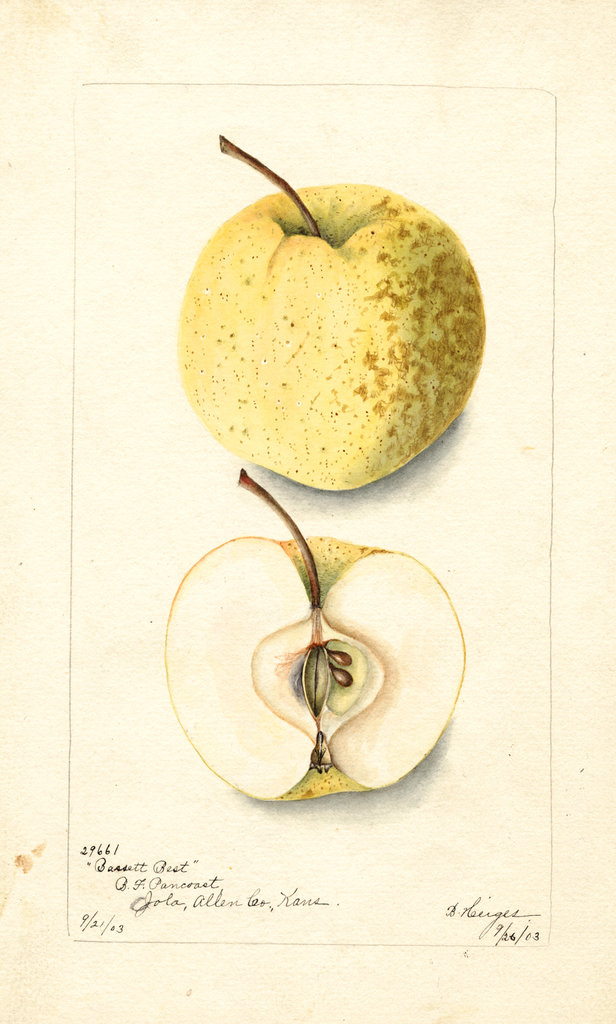 Apples, Bassett Best (1903)