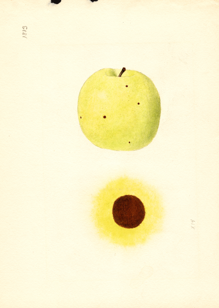 Apples, Grimes (1939)