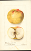 Apples, Benham Brown (1898)
