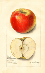 Apples, Green Seek No Further (1913)