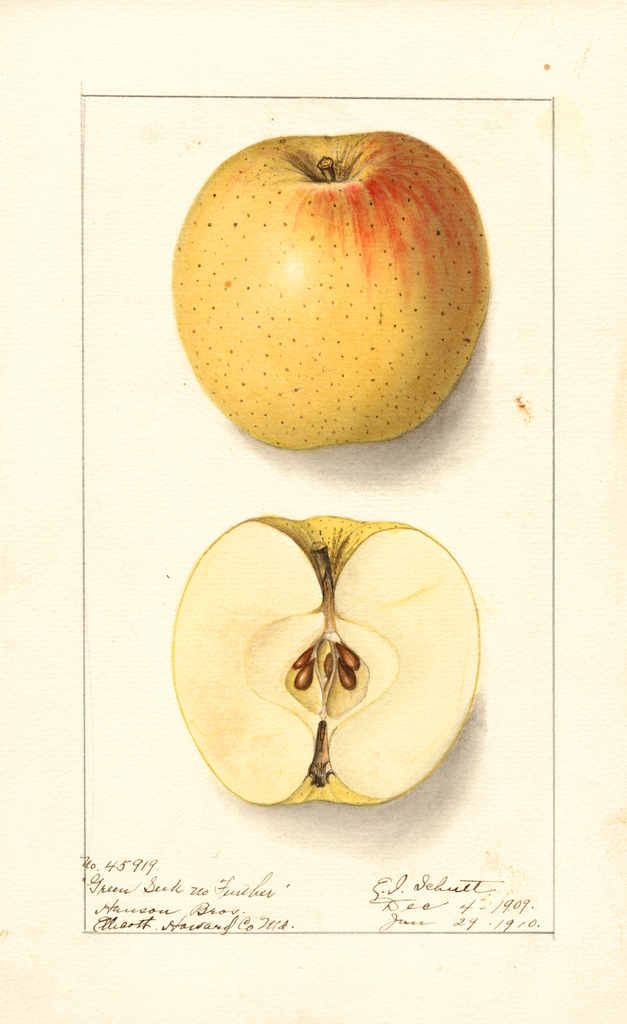 Apples, Green Seek No Further (1910)
