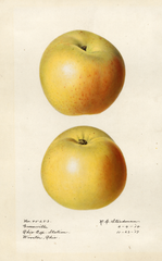 Apples, Greenville (1918)