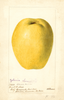 Quinces, Chinese (1897)