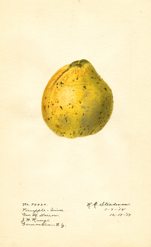 Quinces, Pineapple (1918)