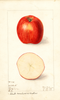 Apples, Shorts Coreless And Seedless (1909)