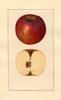 Apples, Baltimore (1925)