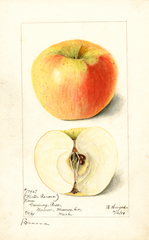 Apples, Banana (1899)