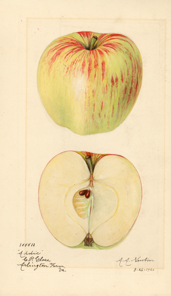 Apples, Addie (1920)