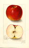 Apples, American Beauty (1912)