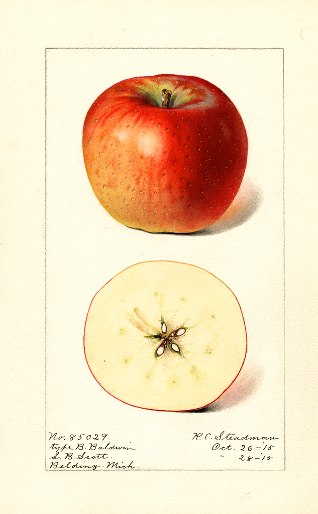 Apples, Baldwin (1915)