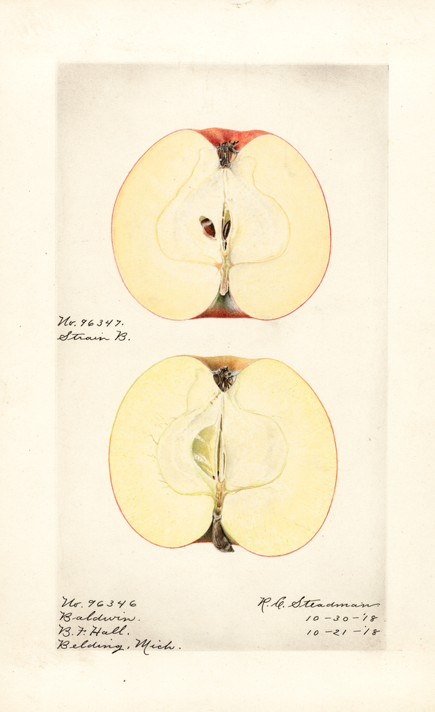 Apples, Baldwin (1918)