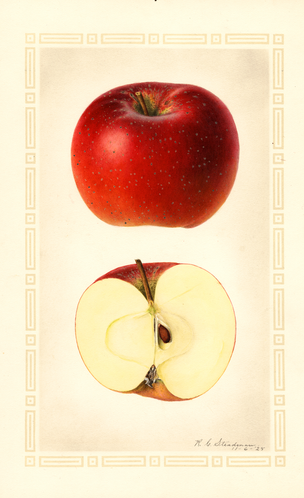 Apples, Baldwin (1925)