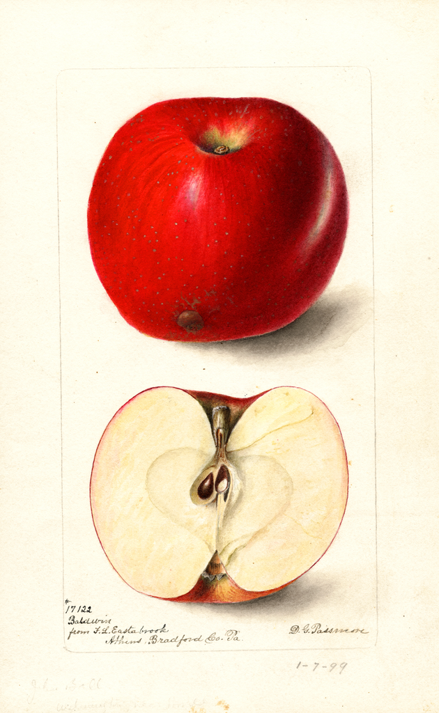 Apples, Baldwin (1899)
