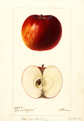 Apples, Black Oxford (1896)