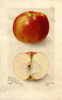 Apples, Cabashea (1905)