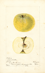 Apples, Cadwallader (1900)