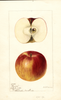 Apples, Bowen (1896)