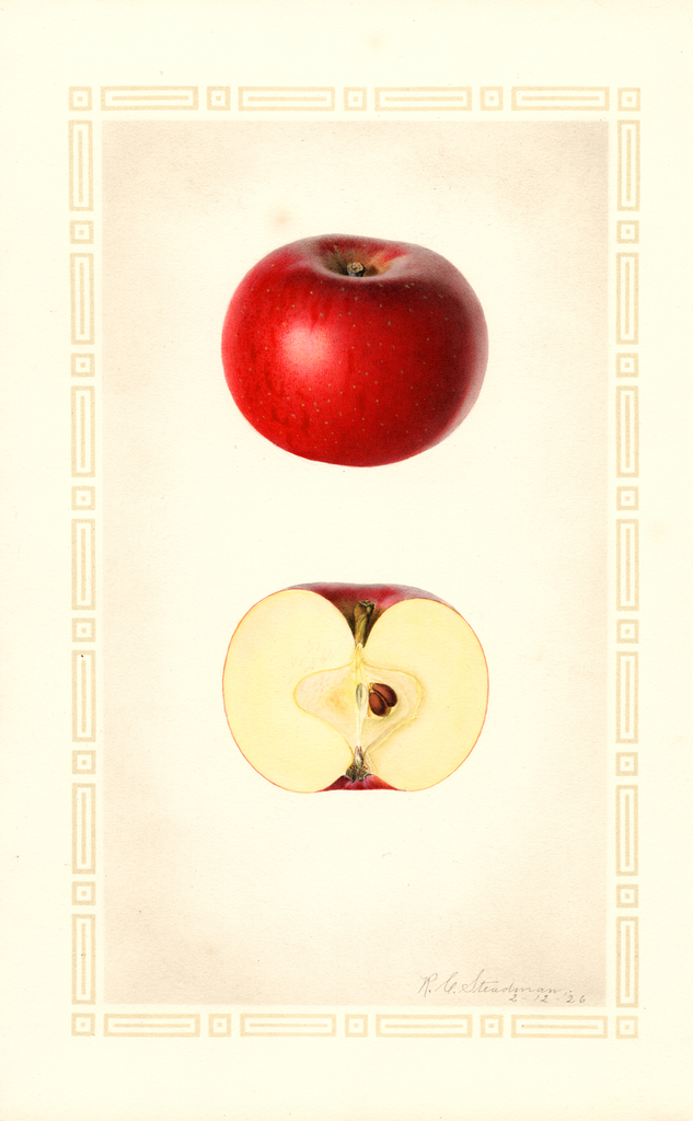 Apples, Brackett (1926)