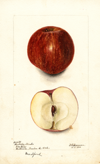 Apples, Kentucky Streaks (1900)