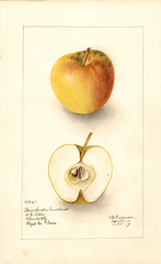 Apples, Briar Sweet (1907)