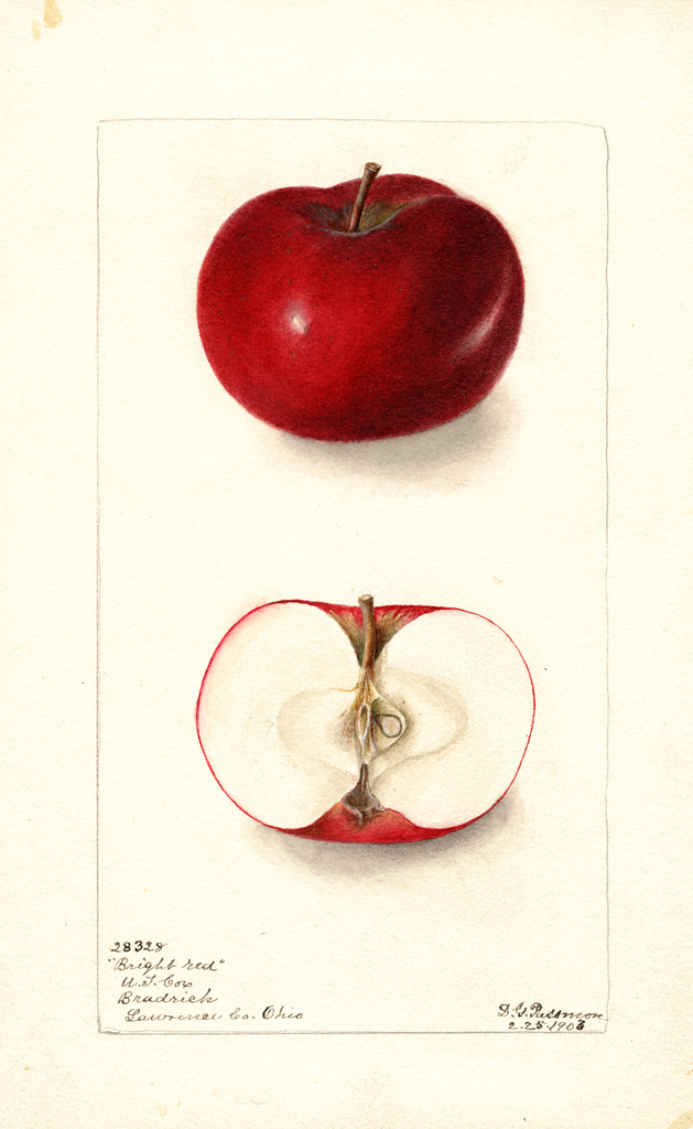 Apples, Bright Red (1903)