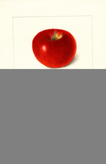 Apples, Brightwater (1900)