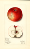 Apples, Brilliant (1913)