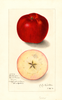 Apples, Baldwin (1912)