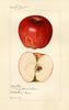 Apples, Bay State (1923)