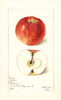 Apples, Beahm (1899)