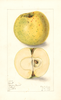 Apples, Belmont (1908)