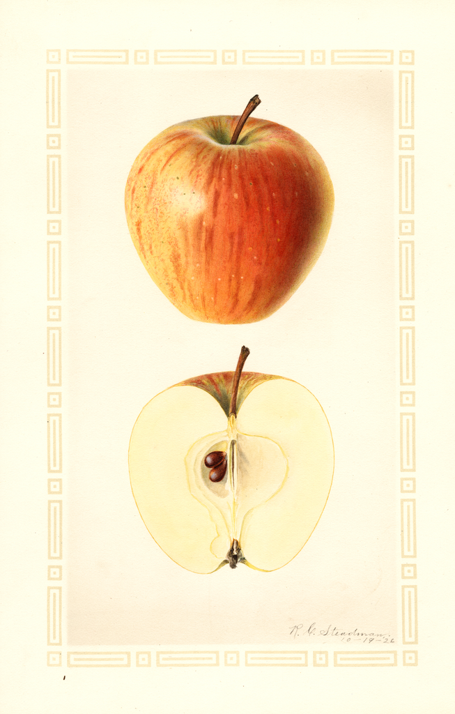 Apples, Cornell Fancy (1926)