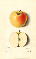 Apples, Danvers Sweet (1914)