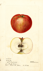 Apples, Early Joe (1895)