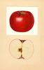 Apples, Early Mcintosh (1937)