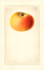 Apples, Beninanako (1928)