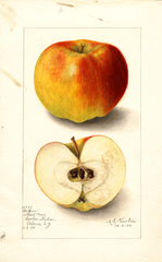 Apples, Boiken (1905)