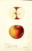 Apples, Bennorton (1895)