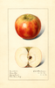 Apples, Bens Red (1916)