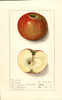 Apples, Cannon (1912)