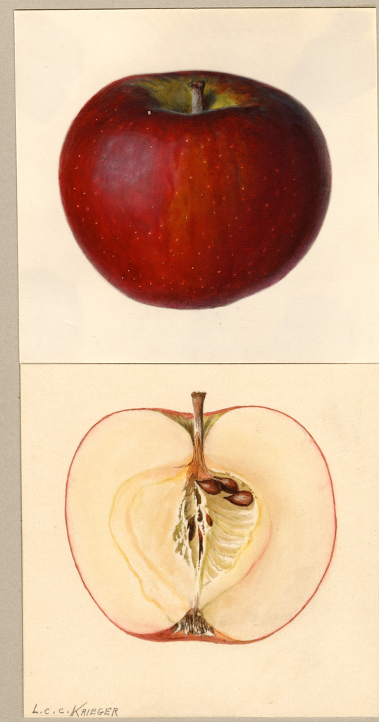 Apples, Carlton (1935)