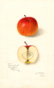 Apples, Missing Link (1910)